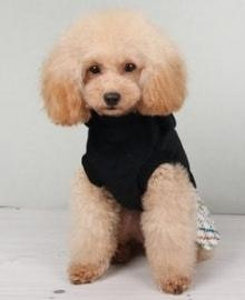 rddpetshop PET CLOTHING 714046